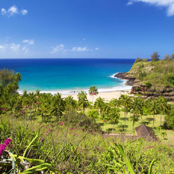 Allerton Garden Tour Best Kauai Tours